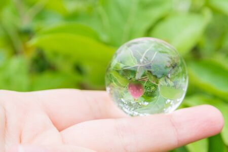 Reflection of a small young Apple in a glass transparent ball
