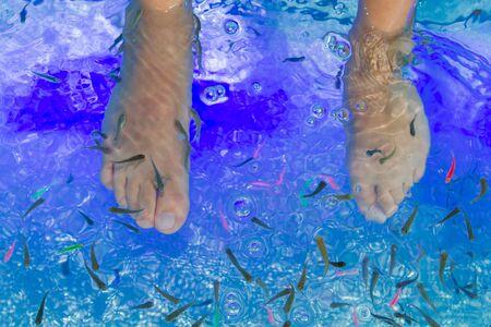 Fish Garra rufa in the aquarium treated feet