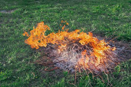 Fire of dry twigs on the green grass Фото со стока