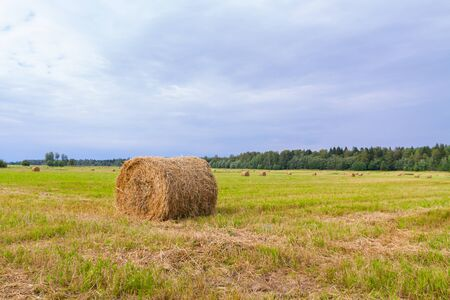 Haystacks are removed from the fields in the summer near the forest