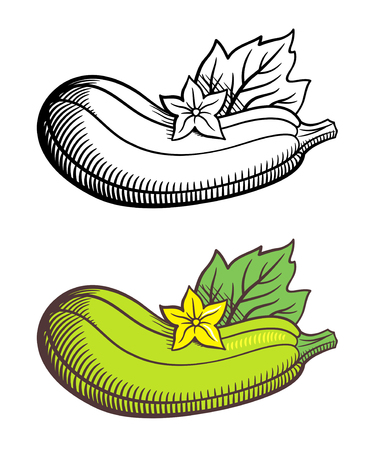 courgette: Stylized image of zucchini with leaf and flower. Vector, isolated on white. Outline and colored version