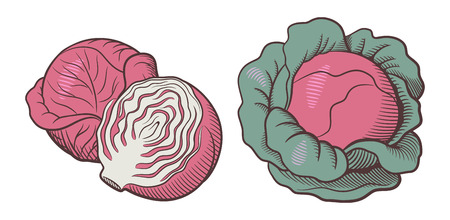 Stylized illustration of red cabbage