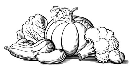 pumpkin tomato: Still-life with vegetables. Pumpkin, zucchini, eggplant, broccoli, lettuce and tomato. Stylized vector illustration