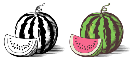 Stylized illustration of watermelon. Vector, isolated on white. Outline and colored version