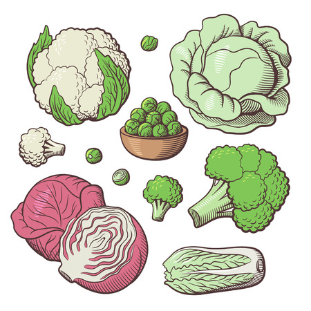 broccoli sprouts: Set of stylized vector vegetables. White cabbage, red cabbage, cauliflower, broccoli, chinese cabbage, brussels sprouts Illustration