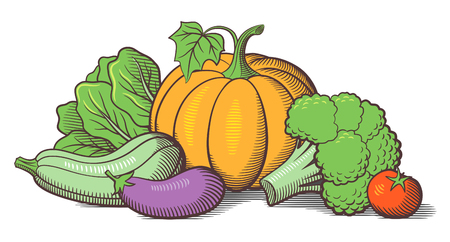 courgette: Still-life with vegetables. Pumpkin, zucchini, eggplant, broccoli, lettuce and tomato. Stylized colored vector illustration Illustration