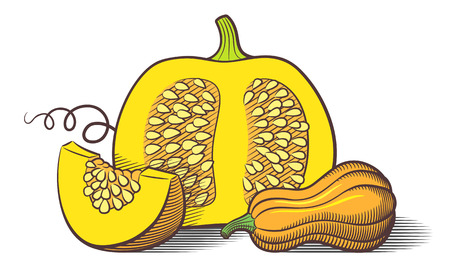 Stylized image of pumpkins. Pumpkin cut with seeds, pumpkin slice and butternut squash. Colored vector illustration