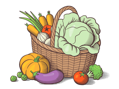 Basket with vegetables. Stylized colored vector illustration. Cabbage, pumpkin, eggplant, tomatoes, onion, carrots, broccoli, brussels sprouts