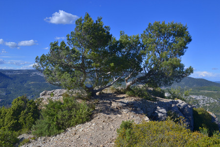 Pine trees on the rock in front of the mountain landscape