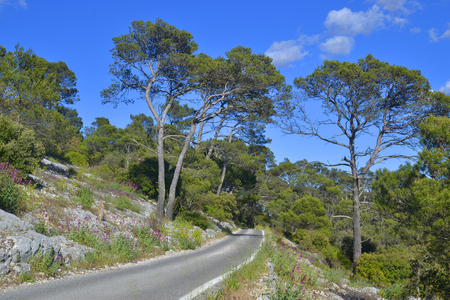 Mountain road goes to horizon in pine tree forest. Beautiful summer landscape
