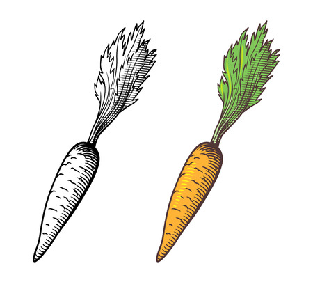 Vector stylized illustration of carrot, outline and colored version. Isolated on white Çizim