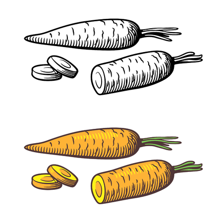 Vector stylized illustration of carrots, outline and colored version. Isolated on white Çizim