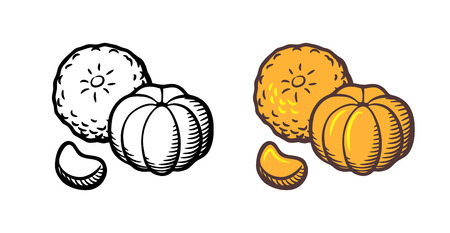 Vector hand drawn illustration of tangerine. Peeled and unpeeled fruits and clove. Outline and colored version
