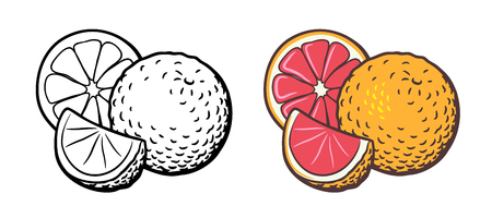 Vector hand drawn illustration of grapefruit with slice and cross section. Outline and colored version