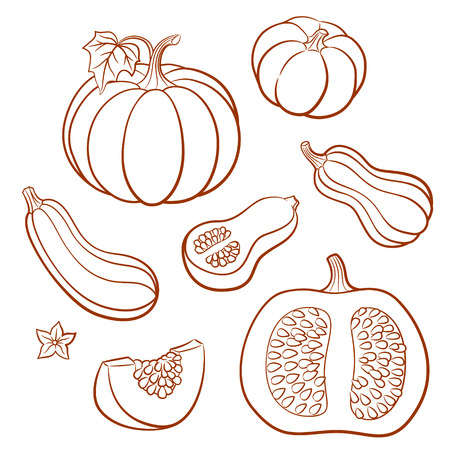 Set of outline vector vegetables. Pumpkins, butternut squash, vegetable marrow; zucchini. Whole fruits with leaves and flowers and slices with seeds