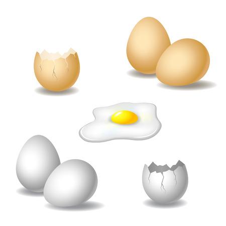 Semi realistic illustration of eggs. Vector set with eggshell, broken egg and yolk