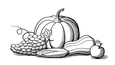Composition of fresh ripe fruits and vegetables. Pumpkin, grapes, corn and butternut squash. Black and white vector illustration
