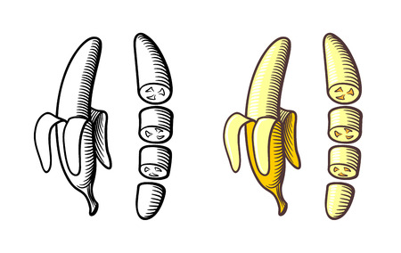 Stylized hand drawn illustration of bananas. Peeled and sliced banana. Outline and colored version