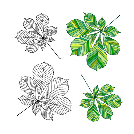 Set of chestnut leaves. Outline and colored version. Vector illustration, isolated on white Çizim