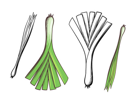 Leek and green onion. Hand drawn vector illustration. Outline and colored version Çizim