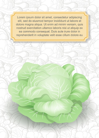 Card design template. Image of cabbage in semi-realistic style on background with line-art vegetables. Vector illustration on agricultural theme