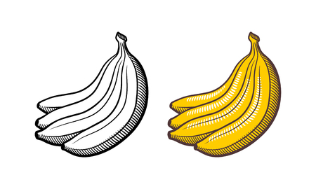 Bunch of bananas. Stylized hand drawn vector illustration. Outline and colored version