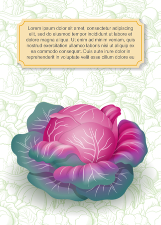 Card design template. Image of purple cabbage in semi-realistic style on background with contour vegetables. Vector illustration on agricultural theme