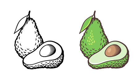 Hand drawn vector illustration of avocado. Whole fruit with leaf, cross section and kernel. Outline and colored version Çizim