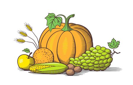 Composition of fresh ripe fruits and vegetables. Pumpkin, grapes, corn, orange, nuts and wheat ears. Colored retro-style vector illustration Çizim