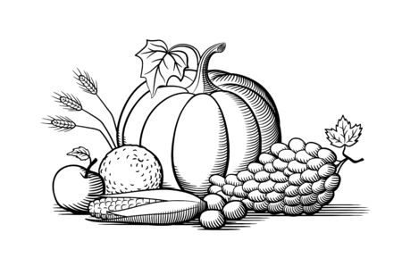 Composition of fresh ripe fruits and vegetables. Pumpkin, grapes, corn, orange, nuts and wheat ears. Black and white vector illustration Ilustracja