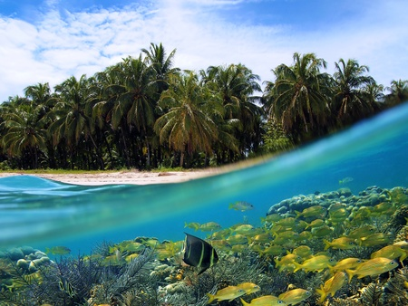 Surface and underwater view with beach, coconuts trees and school of fish in coral, Panama
