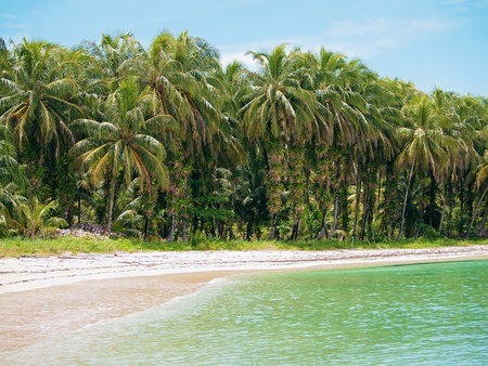 del: Beach with coconuts trees in Bocas del Toro, caribbean sea, Panama Stock Photo