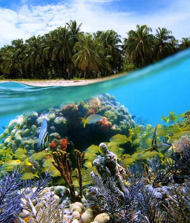 Surface and underwater view with coconuts trees, sand, coral and fish, Bocas del Toro, Panama photo