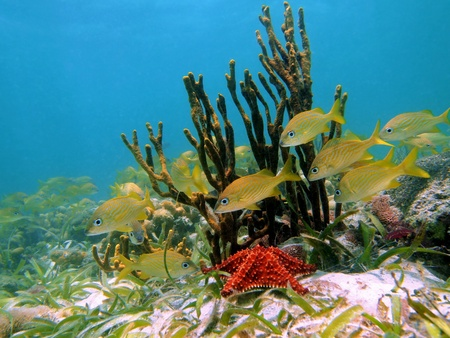 reefscape: Coral and tropical fish in the caribbean sea, Costa Rica Stock Photo