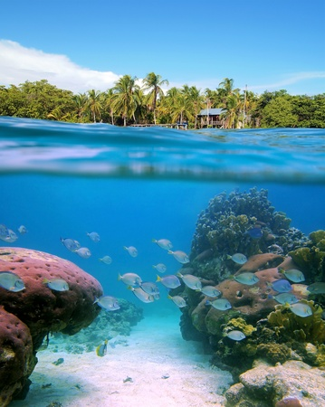 Surface and underwater view with massive corals, tropical fish, a hut and coconuts trees, Bocas del Toro, Panama