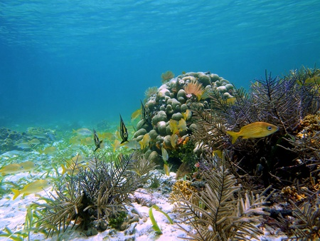school of fish: Corals and colorful tropical fish in the caribbean sea, Costa Rica Stock Photo