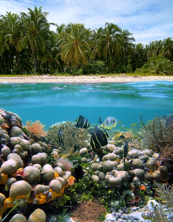 reefscape: Surface and underwater view of an idyllic beach, coral and colorful tropical fish, Caribbean sea, Costa Rica