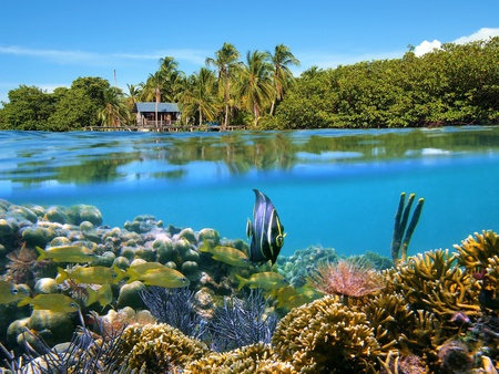 Surface and underwater view with coral, fish, a hut and coconuts trees, Bocas del Toro, Panama photo