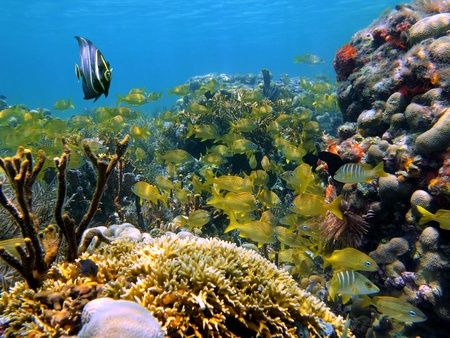 reefscape: Tropical fish in the coral, Caribbean, Mayan Riviera, Mexico Stock Photo