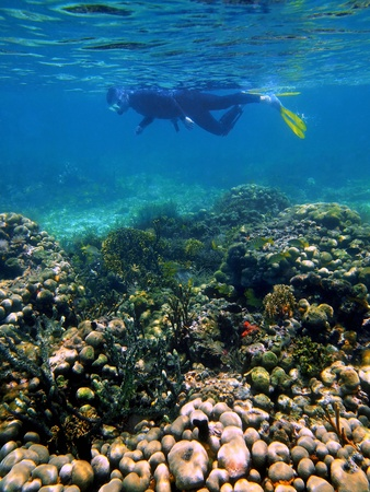 Coral and tropical fish in the caribbean sea, Costa Rica photo