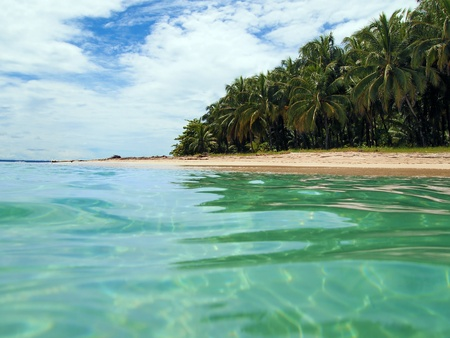 costa rica: Beach with coconuts trees in Cahuita, Caribbean, Costa Rica