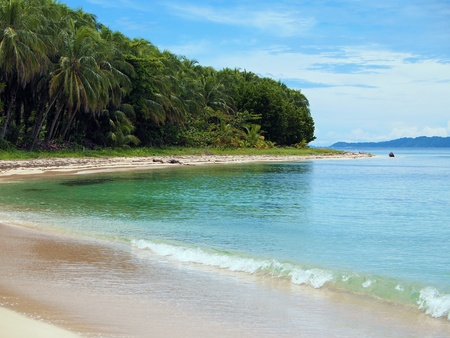 Tropical beach with coconuts trees in Bocas del Toro, caribbean sea, Panama