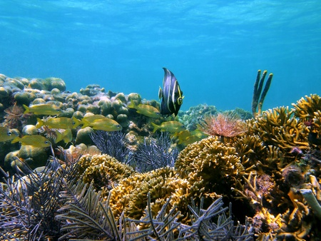 gorgonian: Seascape with corals and tropical fish in the caribbean sea Stock Photo