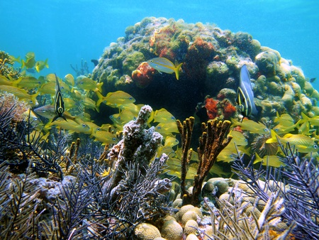 Coral, sponges and school of colorful fish in the caribbean sea, Panama Stock Photo - 10602525