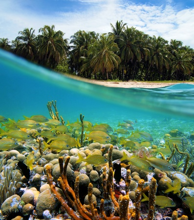 archipelago: Surface and underwater view with coconuts trees, sand, coral and fish, Bocas del Toro, Panama