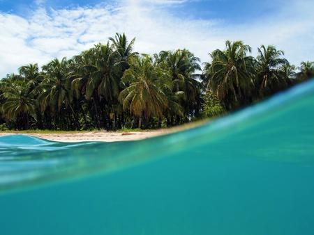 Coast with coconuts trees in Zapatilla island, Bocas del Toro, caribbean sea, Panama photo