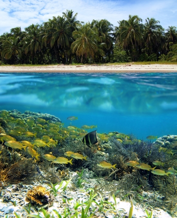 ekosistem: Surface and underwater view with beach, coconuts trees, coral and fish, Zapatilla island, Bocas del Toro, Panama Stok Fotoğraf