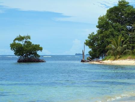Beach with small mangrove island in Bocas del Toro, Caribbean sea, Panama photo