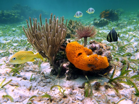 reefscape: Colorful view of coral, sea sponge, sea worm and tropical fish in the caribbean sea, Costa Rica