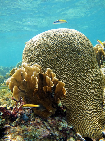 Brain coral with water surface in background photo